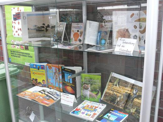 Schaukasten der Schulbibliothek