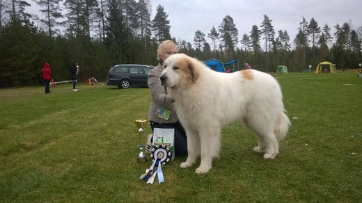 "Echo de'Chien Avangard King ""Aslan"" BOB & Group 2nd"