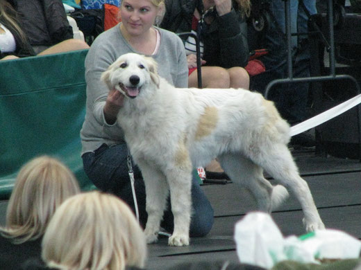 "Chenespae Yourcenar ""Fia"" 5 months old In Rakvere National show - BOB Baby Puppy"