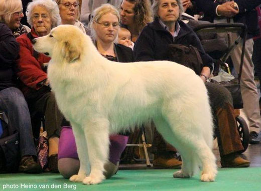 Echo de'Chien Conrad 2nd in Open class CRUFTS 2016