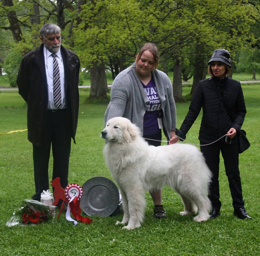 Echo de'Chien Bewitched winning BOB and Best in Show 1 in Finnish National Elevage Specialty 2015