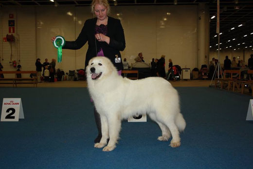 Echo de'Chien Bewitched - CACIB BOS Finnish Winner 2015