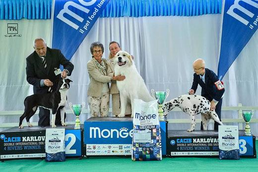 Echo de'Chien Escuda - Best in Show Junior in Karlovac IDS. Judge Lisbeth Mach, Switzerland