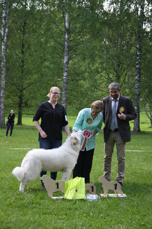Maline de la Belletiere 7 months old BOB Puppy and BIS Puppy 1 in Finnish Pyr Specialty under Elina Haapaniemi