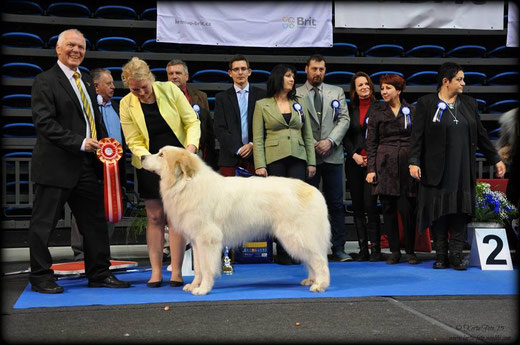 BEST IN SHOW WINNER in Tallinn All Breed National Show 1.3.2015 - Echo de'Chien Aslan Warrior. BIS Judge: Gunnar Nymann, Denmark. Photo by Kertu