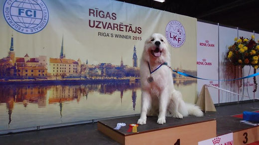 Echo de'Chien Cornelius - Riga Winner 2015