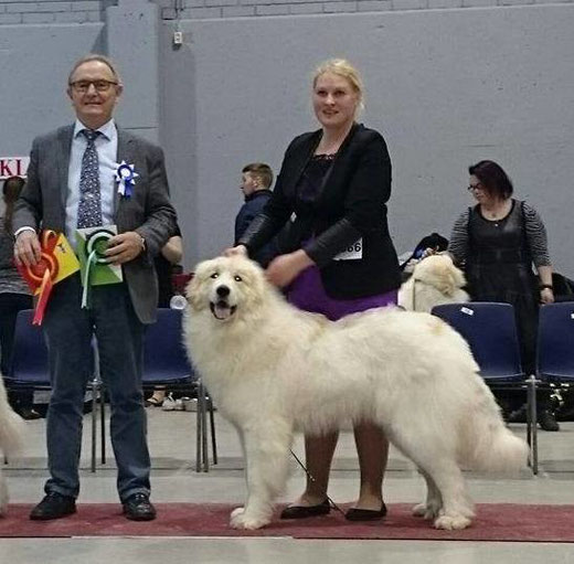 Echo de'Chien Estella 11 months old winning CAC BOS in Lahti International show