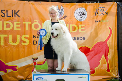 Echo de'Chien Aslan Warrior BOB + Group 2nd in Tartu Nat show 2nd of August. Photo Siim Kinnas