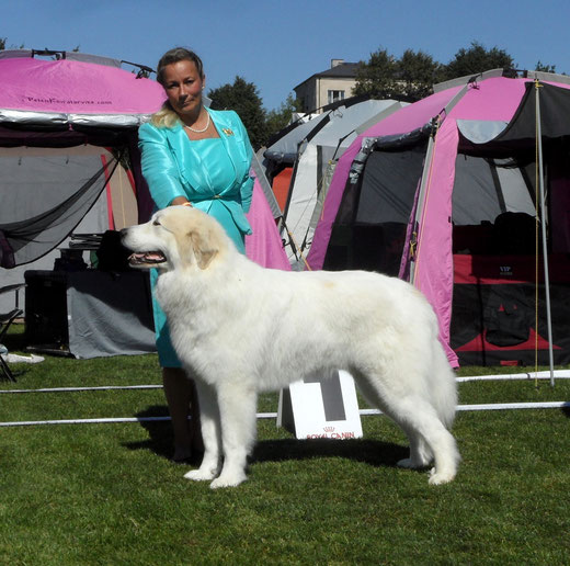 Echo de'Chien Conrad - Baltic Winner 2015