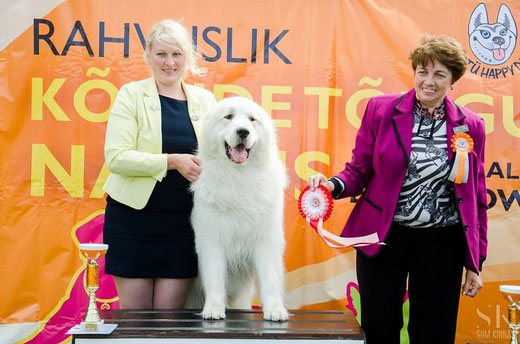 Tartu National show 01.08.2015 - BOB and Group Winner . Judge Jelena Kuleshova, Russia. Photo Siim Kinnas