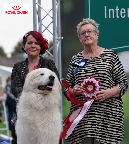 Echo de'Chien Conrad 4 years old winning group in Tallinn International dog show
