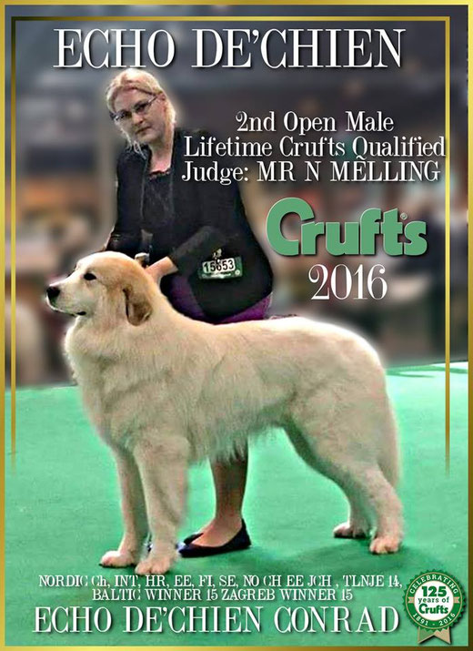 Echo de'Chien Conrad 2nd in Open Class CRUFTS 2016. Judge Noel Melling, UK