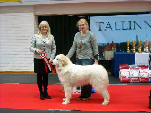 Conrad 8 months old in Tallinn International dog show Winter Cup 2014 winning BEST IN SHOW PUPPY  under judge Tiina Taulos, Finland. photo: Külli Ragel