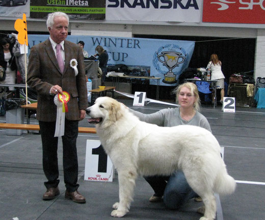 Bella 2 years old winning CACIB BOB & TLN Winter Cup 2014 title under judge Jean-Jacques Dupas, France