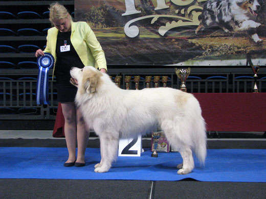 BEST IN GROUP 2nd in Tallinn All Breed National show 28.2.2015 - Echo de'Chien Aslan Warrior. Group judge Gunnar Nymann, Denmark. Photo by Kalvar Silde
