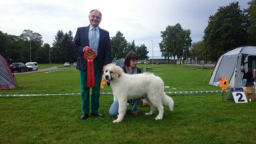Best in Show Baby Puppy Winner - Echo de'Chien Diego