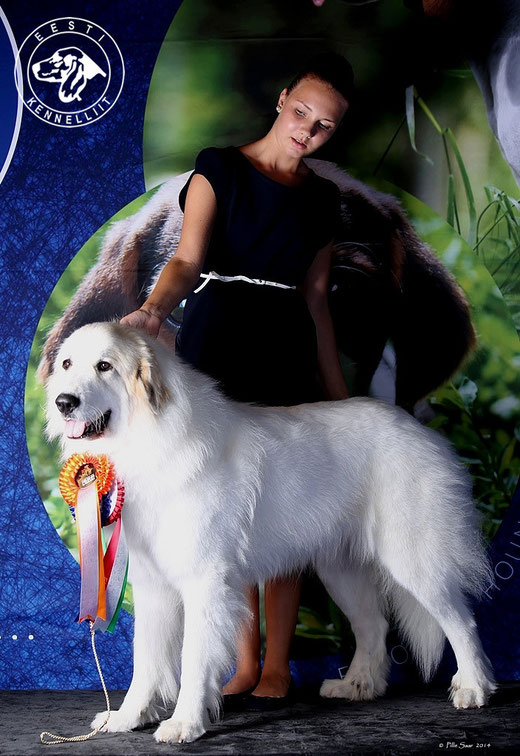 Echo de'Chien Bianca - Vice World Winner 2014