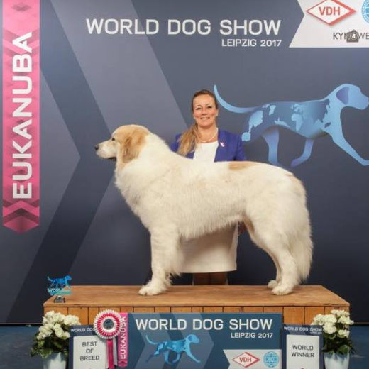 Echo de'Chien Escuda pour Garcon - BOB in World Winner 2017