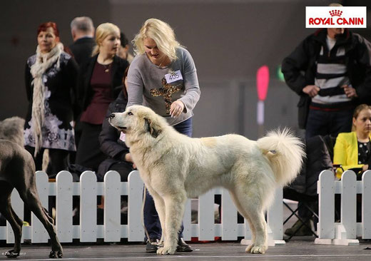 Echo de'Chien Carmen in Tallinn Winter Cup Winner 2015 BOB and CACIB age 21 months