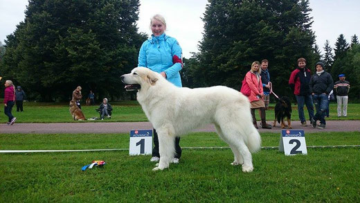 Echo de'Chien Beau Martin - CAC and BOB - new Estonian Champion