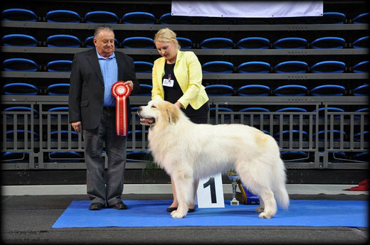 BEST IN GROUP WINNER in Tallinn All Breed National show 1.3.2015 - Echo de'Chien Aslan Warrior. Group Judge Hans Bierwolf, Austria. Photo by Kertu