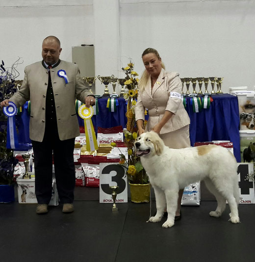 Echo de'Chien Escuda 5 months old winning Best in Show Baby Puppy #3