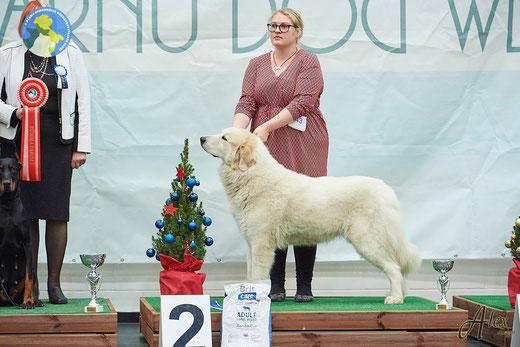 Bella 8 years of age winning Group 2nd in Pärnu NDS 2019