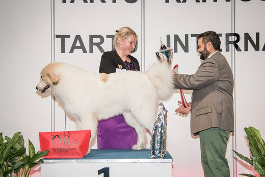 Echo de'Chien Estella 6 months old - BEST IN SHOW PUPPY WINNER in Tartu  International show 7.11.2015