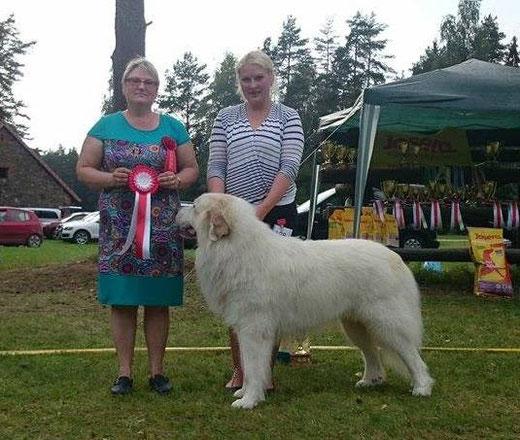 Echo de'Chien Aslan Warrior - Group winner in Võru National show judged by Irina Poletaeva, Ireland. Photo Kalvar Silde