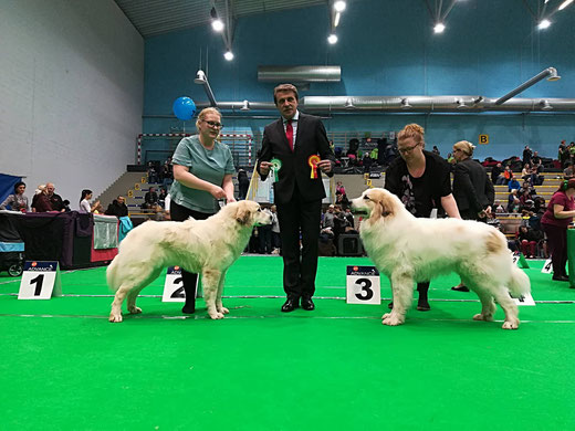 BOS - Echo de'Chien Freya BOB - Mountain's Pearl SG Sure Fire Winner