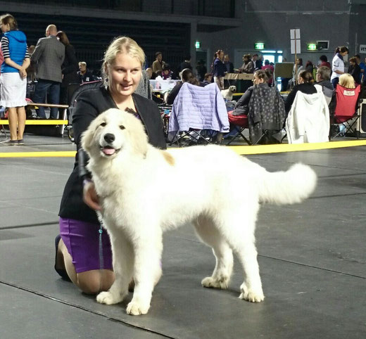 Stella 5 months old and in her first show - BOB Baby puppy