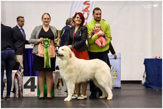 Echo de'Chien Conrad - BEST IN SHOW #4 in Rakvere NDS 21.10.2017