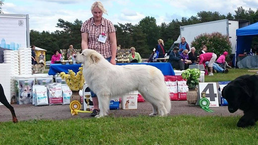 Echo de'Chien Aslan Warrior Group 3rd in Luige Nat show 27th of June 2015 by judge Espen Engh, Norway