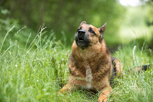 Auch Rusty darf mal über sein schweres Los als Therapeuten-Hund berichten...