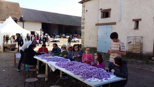 Fête du safran et marché fermier : émondage