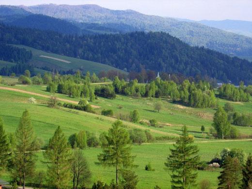 Krajobraz doliny Szczawnickiego Potoku z widoczną, górującą nad wioską Szczawnik wieżą cerkwi pw. św. Demetriusza (Dymitra)