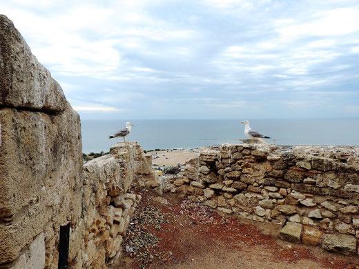Dos gaviotas enmarcan el cielo y el mar desde El Castell de Dénia