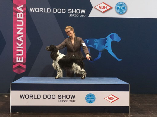 """Jolanthe vom Belauer See"" successful at the World Dog Show 2017, Photo: S. Arendt"