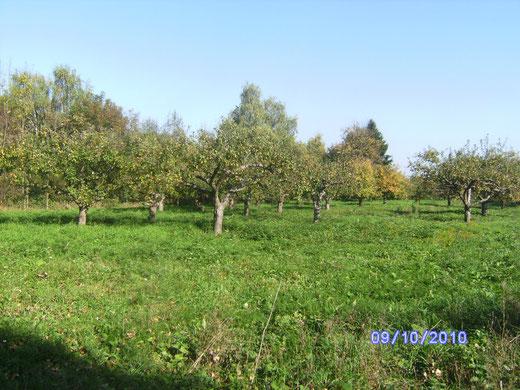 Apfelwiese bei Freinsheim
