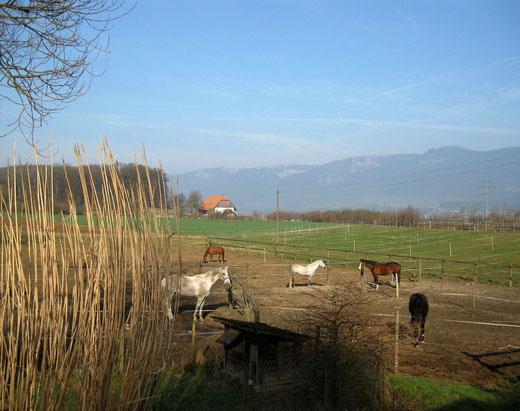 Lama und Pferde Trekking in 4 Regionen Solothurn, Wasseramt und Bucheggberg Lebern