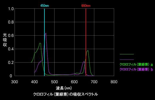 ( 植物工場研究所データより )
