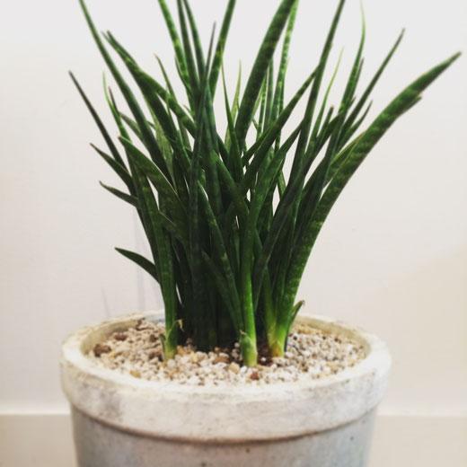 mokuhon 植物