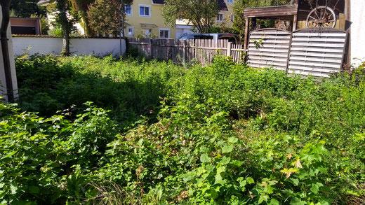 verwilderter Garten