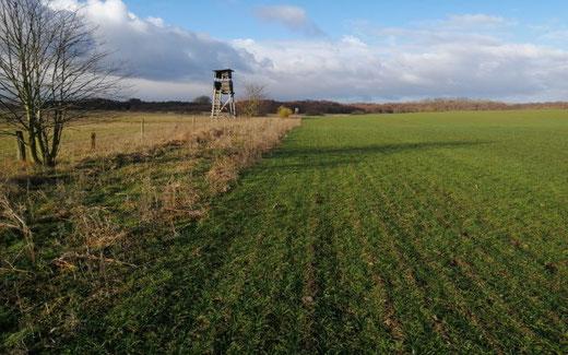 95 ha Ackerfläche in Sachsen Anhalt kaufen