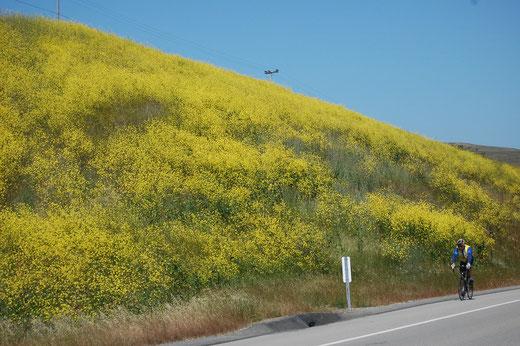 Gelbes Trikot an gelben Blumen
