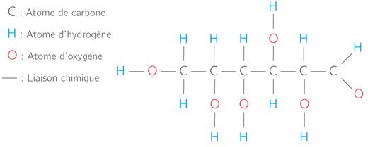 Exemple de molécule glucidique. Source: internet.