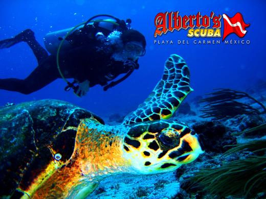 Dive Courses Playa del Carmen - Albertos Scuba