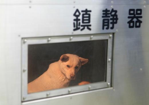 チロちゃんが殺されてから40年、あれから幾億のチロが同じ運命を辿ったのか。今日も、明日も、捨てられてセンターに収容され、同じ運命を辿る犬猫が山のようにいます。これを、何とかしないと、私たちは人間ではありません。
