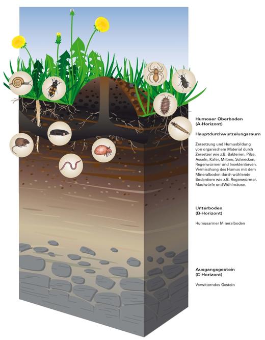 natürliche Schichen Gartenboden