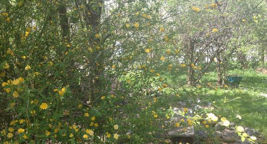 Unser Naturgarten im RHYNER HOF